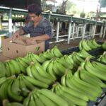 Complicada la situación en Bocas del Toro donde empresa y trabajadores no logran acuerdo