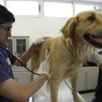 Las ventajas y desventajas de castrar a los perros