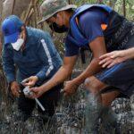 Viveros de concha negra, para proteger la especie y también el manglar